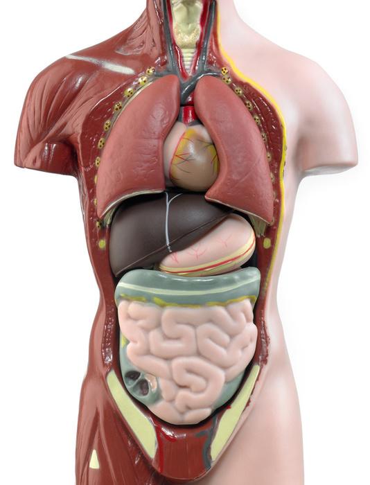 CDK e.V. - Organtransplantation